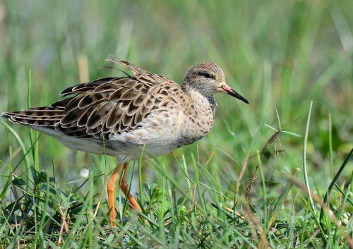 bird marsh wetland