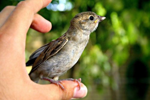 bird animal hand