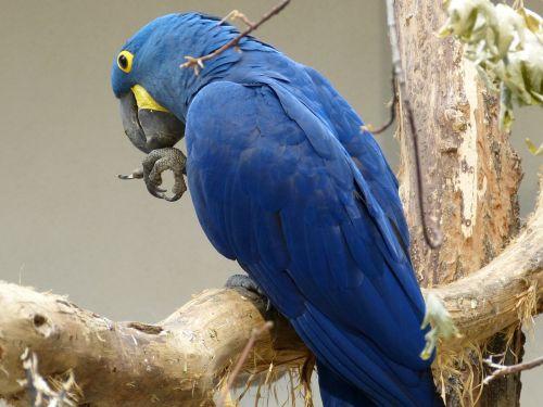 bird parrot plumage