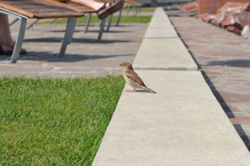 bird idyllic small