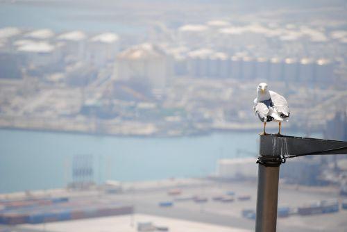 bird barcelona port seagull