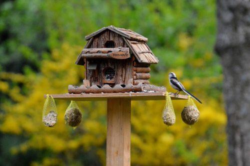 bird aviary food