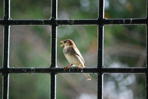 bird beak majestic