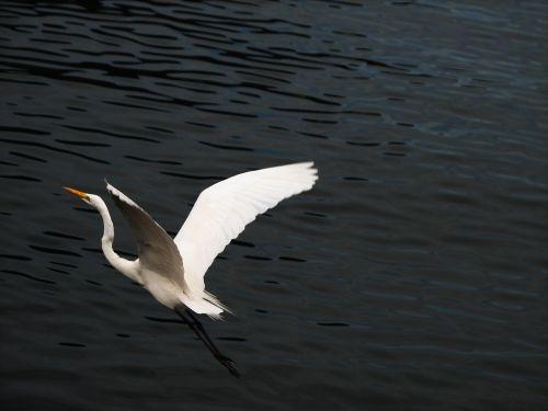 bird heron nature