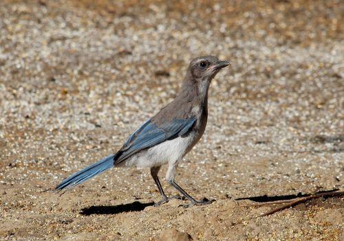 bird oregon wildlife