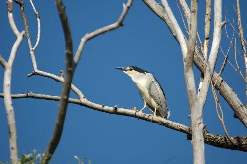 bird night heron lookout