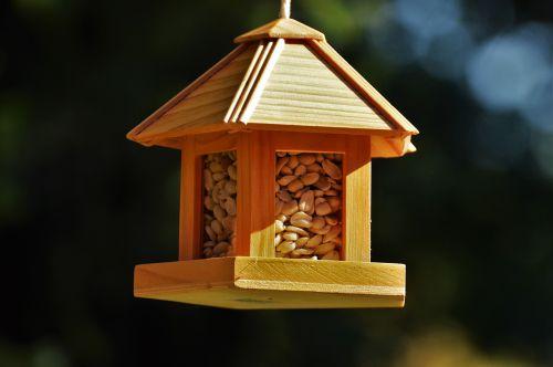 bird feeding birds