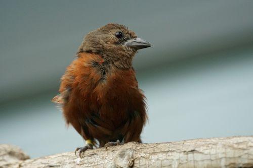 bird tropics exotic