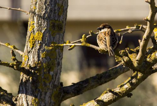 bird tree palazzo