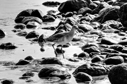 Bird Among Rocks