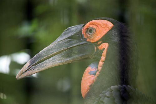 Bird Beak Close Up
