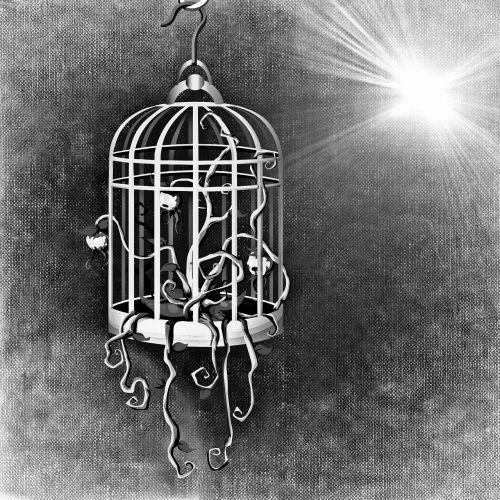 bird cage cage plant