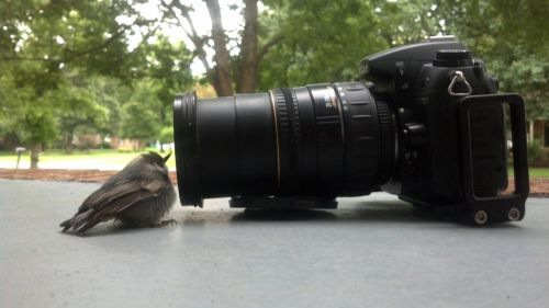 Bird Camera Watching