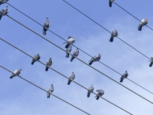 Bird Choir