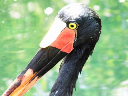 Bird Close Up