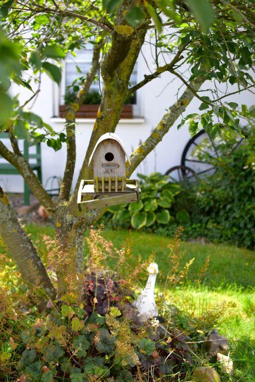bird feeder tree feeding