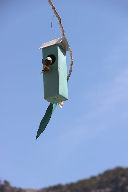 bird feeder nesting box nesting place