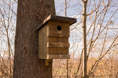 bird feeder wood aviary