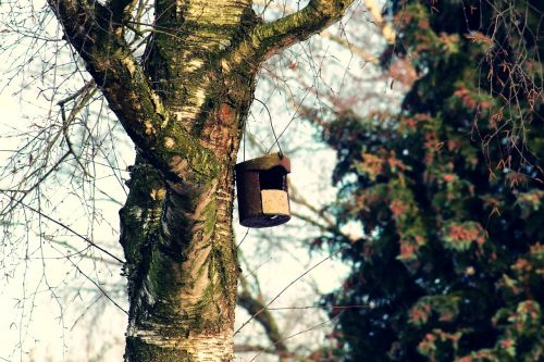 bird feeder tree aviary