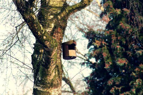 bird feeder tree aviary