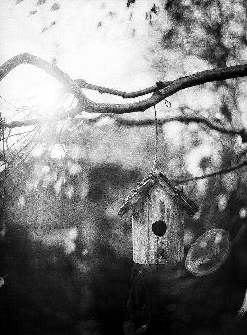 bird feeder tree wood