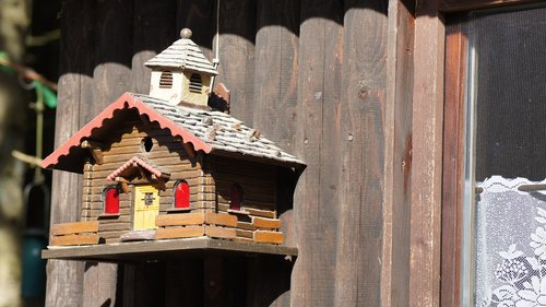 bird feeder  aviary  feeding place