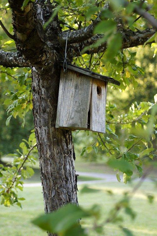 bird feeder  aviary  wood
