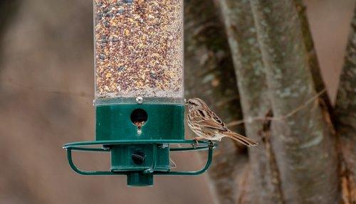 bird feeder  back yard  birdwatching