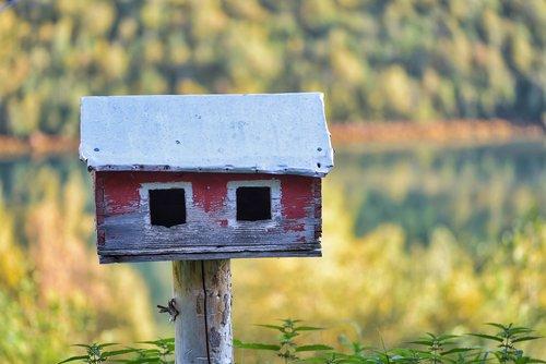 bird feeder  feeder  birdhouse