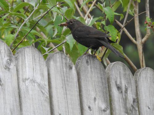bird feeding wildlife nestling