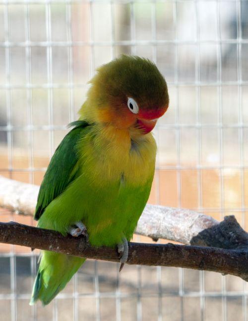 Bird Grooming Feathers