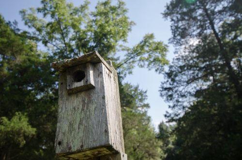 bird house birdhouse trees