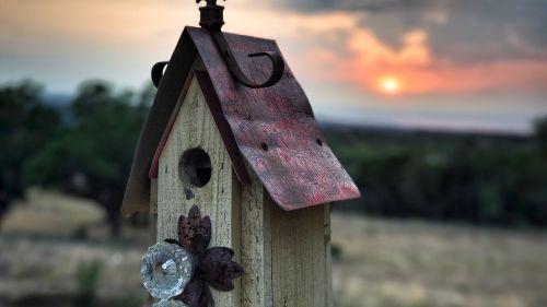 bird house birdhouse nature