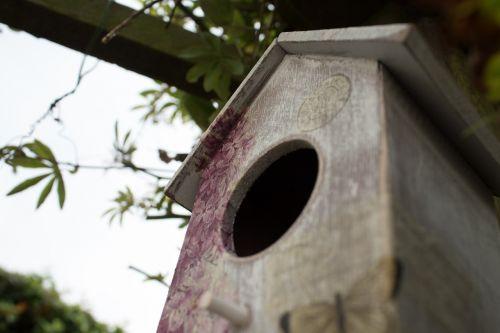 bird house bird box garden
