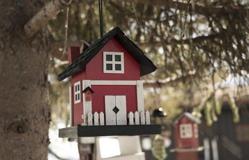 bird house  tree  nature