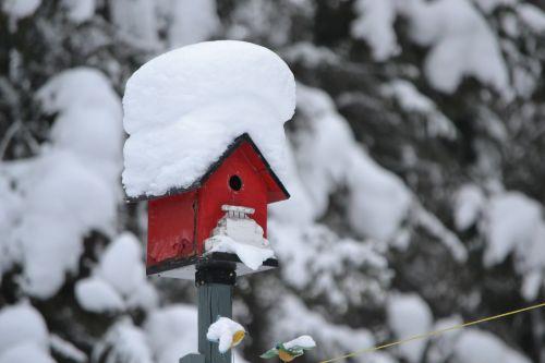 bird house red winter