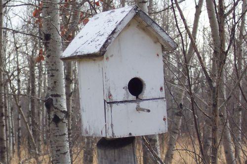 Bird House Closeup