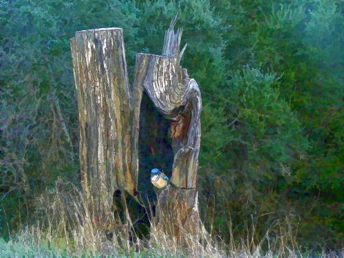 Bird In Log