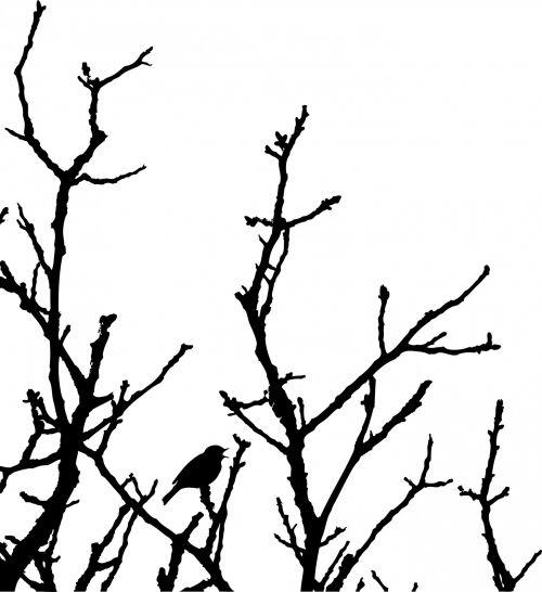 paukštis, robin, juoda, medis, siluetas, balta, fonas, menas, iliustracija, gamta, paukštis medžio siluetu