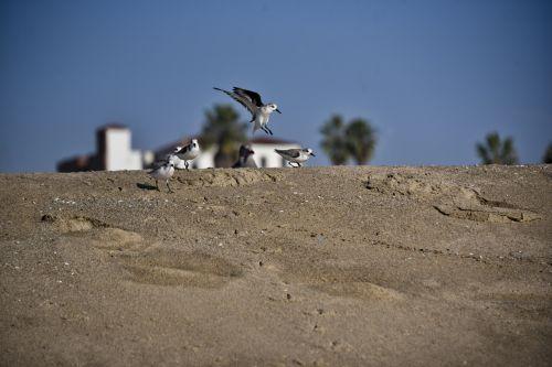 Bird Landing On Beach