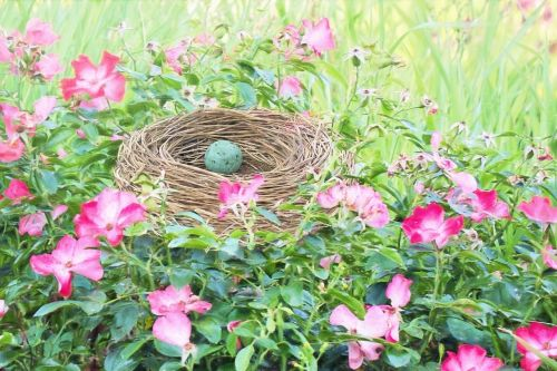 bird nest bird's nest robin egg