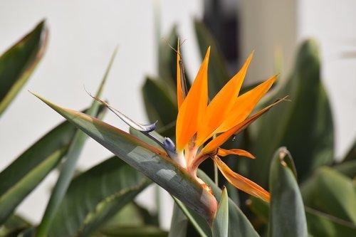 bird of paradise  plant  fauna
