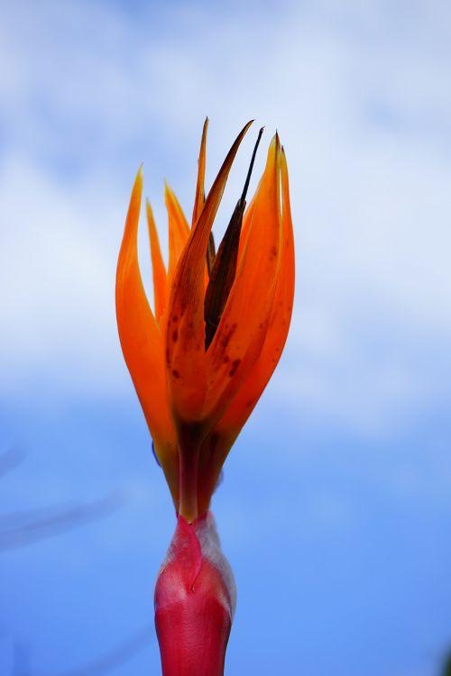 bird of paradise flower flower blossom