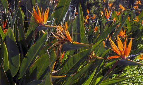 Bird Of Paradise Garden