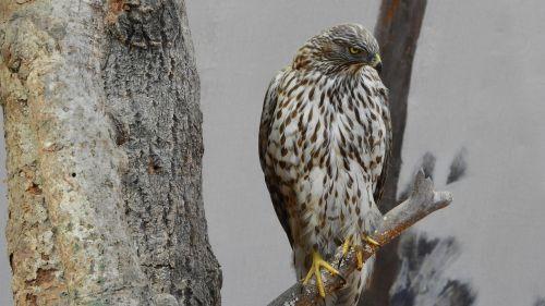 bird of prey stuffed museum