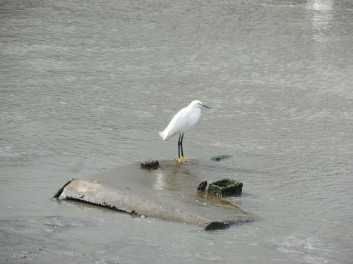 Bird On Ocean Debris