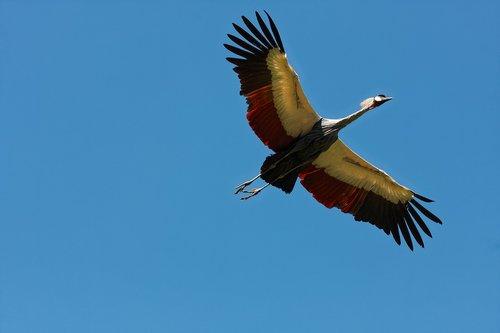 bird park walsrode  freiflug  bird