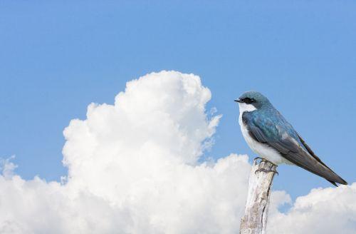 Bird Perched Blue Sky