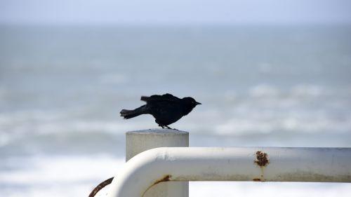 Bird Ready For Flight