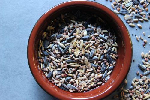 bird seed grains sunflower seeds
